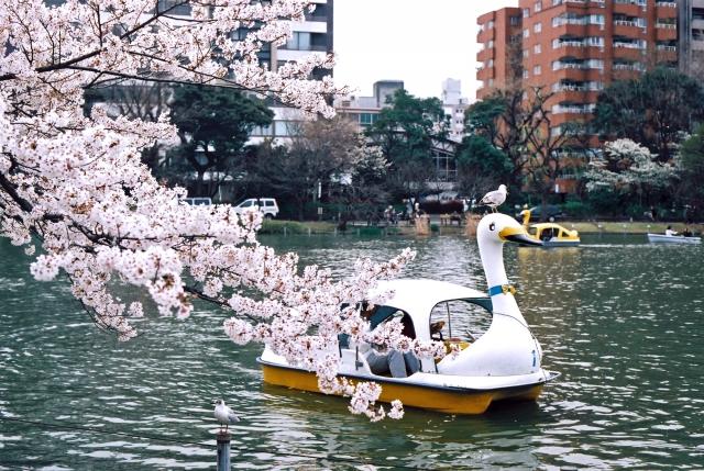 うえの桜まつり 2019