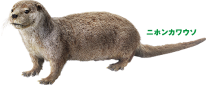 絶滅動物の貴重なタイプ標本も展示!