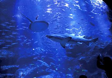 東京で唯一の世界自然遺産 小笠原諸島の美しい海の世界